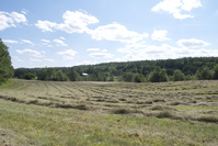 Hay Field New England