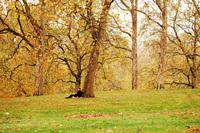 London Park 3
