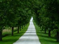 White Stone Path