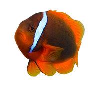 tropical fish 2