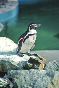 Animals in Stanley Park Zoo 4