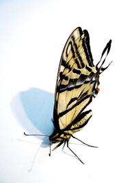 Butterfly B 2