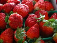 A half-flat of Strawberries
