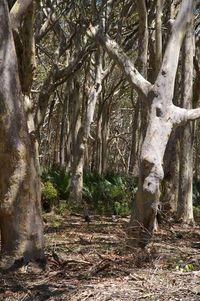 lake brou trees 48