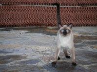 obi the poser cat