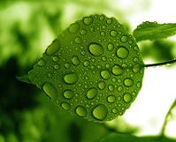 Leaf in the Rain 3 1