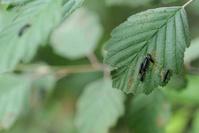 Maggots on the Leaf