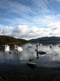 Swan Lake 1