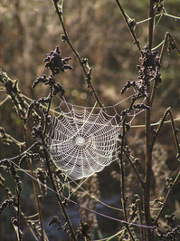 Cobwebs 2
