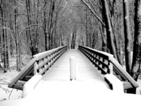 "The ""Wilderness Bridge"