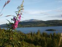 Mount Flower