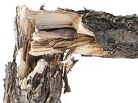 Break tree