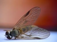 Die fly 3