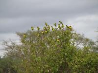 Serengeti Birds