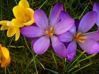 Spring Garden 4