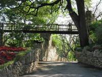 Japanese Tea Gardens, San Antonio 3