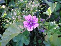 Summer flowers 1
