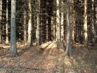 Forest of Fangorn