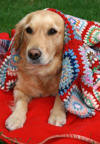 Bonnie in Blankets 2