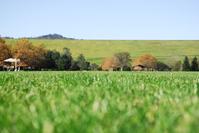 open grassy field