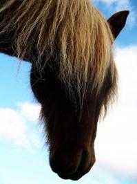 Horses. 1