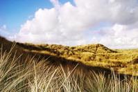 Wild Grass Blackpool