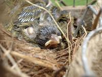 birds/passaros 3