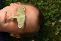Green Moth 3