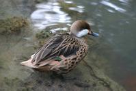 Ducks 5