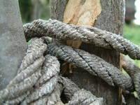 oldknots 2