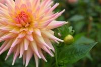 Flowers & beauty