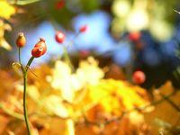 autumn0 4