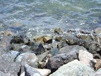 Rocks off Coronado bay