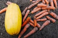 Squash and some carrots