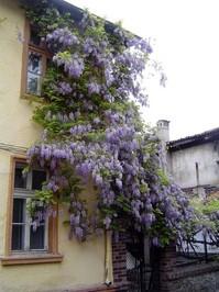 poor house in rich violet