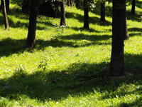 trees [PL]