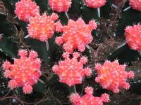 Colourful cactus 2