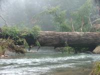 Mist Fallen tree