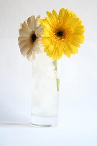 Flower Series:. 9