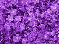 Give me a purple flash