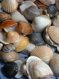 More shells 5