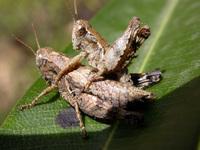 Insecte 34