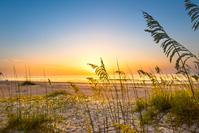 Sea Oats Sunrise