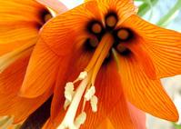 macro flower 1