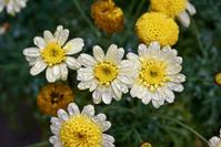 flower 06