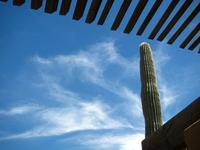 Saguaro Cloudy Sky