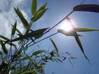 Bamboo shade