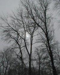 Dead Winter Sky