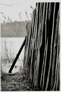 wood walk 2