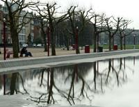 Amsterdam Trees